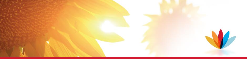 Paginabreed zonnebloem